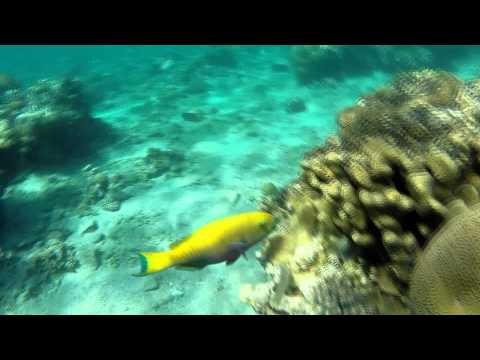 Just forget about everything... Red Sea, GoPro