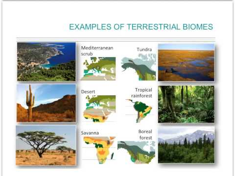 Earth climate and biomes