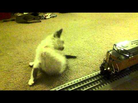My Foster Kitten Almost get's HIT by a Model Train.
