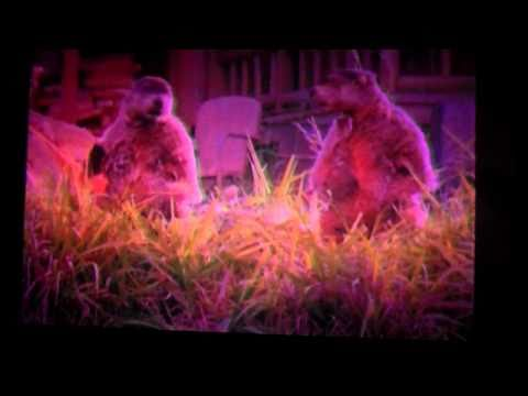 VID00049 Do Woodchucks Chuck Wood By Geico (0_50).MP4 Video