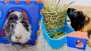 Cool Guinea Pig Items from Singapore