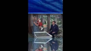 COMEDY MOVIE S3E06 ENDORA MOVES IN FOR A SPELL