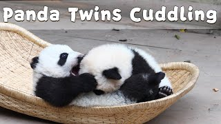 Baby Panda Twins Cuddle Each Other In The Basket | iPanda