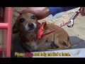 A sick three legged dog sleeps in the rain on a shoebox and waits months to be rescued MP3
