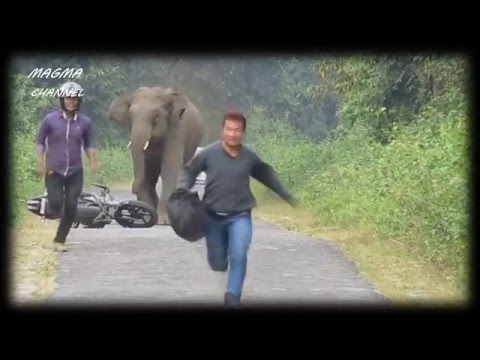 Ataque de animales salvajes a seres humanos parte 7 || Wild animals attack humans Part 7