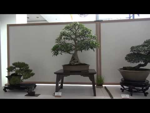 BCI bonsai convention gold coast 2014