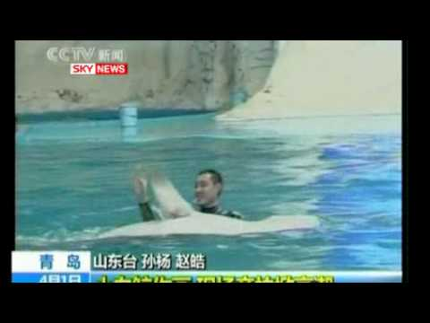Chinese Whale Wows Crowds With Art Work   News - Rest Of World.flv