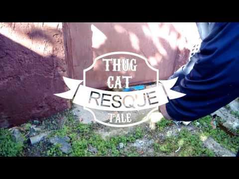 Thug Life Cat Rescue !