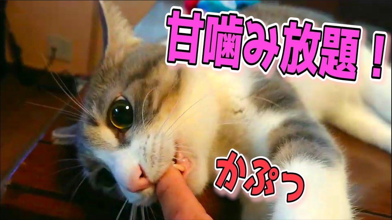 猫 ついてくる 噛む