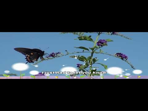 Swallowtail Butterfly Life Cycle on Butterfly Lenny Kravitz With Lyrics  Ft  Pipevine Swallowtail