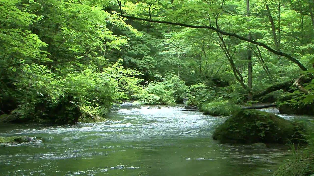 tyomora1 奥入瀬渓流 YouTube 環境チャンネル 国連水の日 掲載 - YouTub