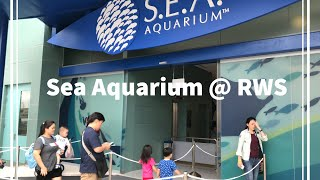 SEA Aquarium at Resort World Sentosa (RWS) Singapore