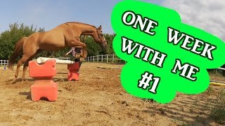 One Week with me #1 - effektives Training,  Haare färben und News!! | Serenity Horses