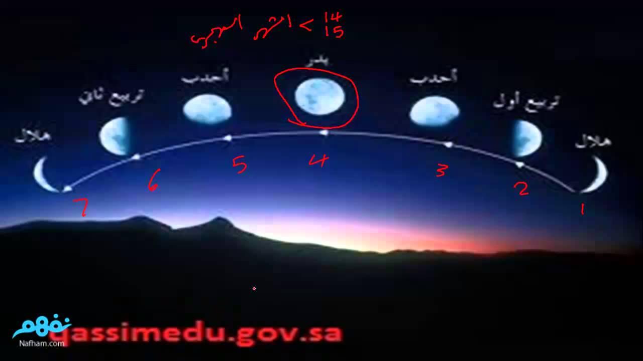 كتاب تربية النحل من البدايه الى النهايه pdf