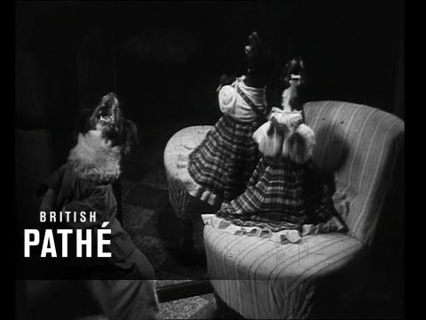 0 A Night in the Dog House (1952)