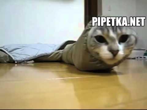 Котик – гусеница