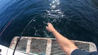 Fishing Catalina Island 2017.