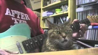 体を張ってギターのミュート奏法を手伝うにゃんこ