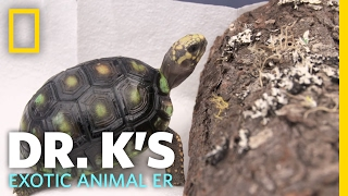 A Tortoise Spa Day | Dr. K's Exotic Animal ER