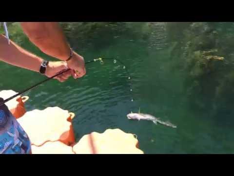 ловля крупного сазана на реке видео