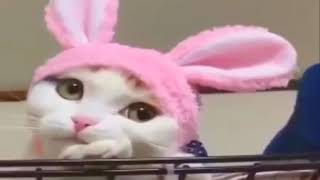 v s mobiПРИКОЛЫ С КОТАМИ ТОПовая подборка 2017Best Funny Cats Videos Compilation Try Not To Laugh 2