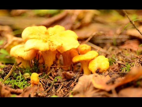 Грибы в лесах Подмосковья в октябре , очень мало