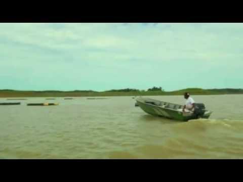 Cooperação Brasil - Costa do Marfim na criação de tilápias