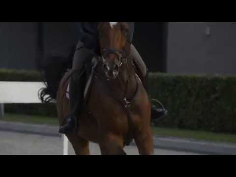 Horse Sports Services Netherlands | www.hssn.nl