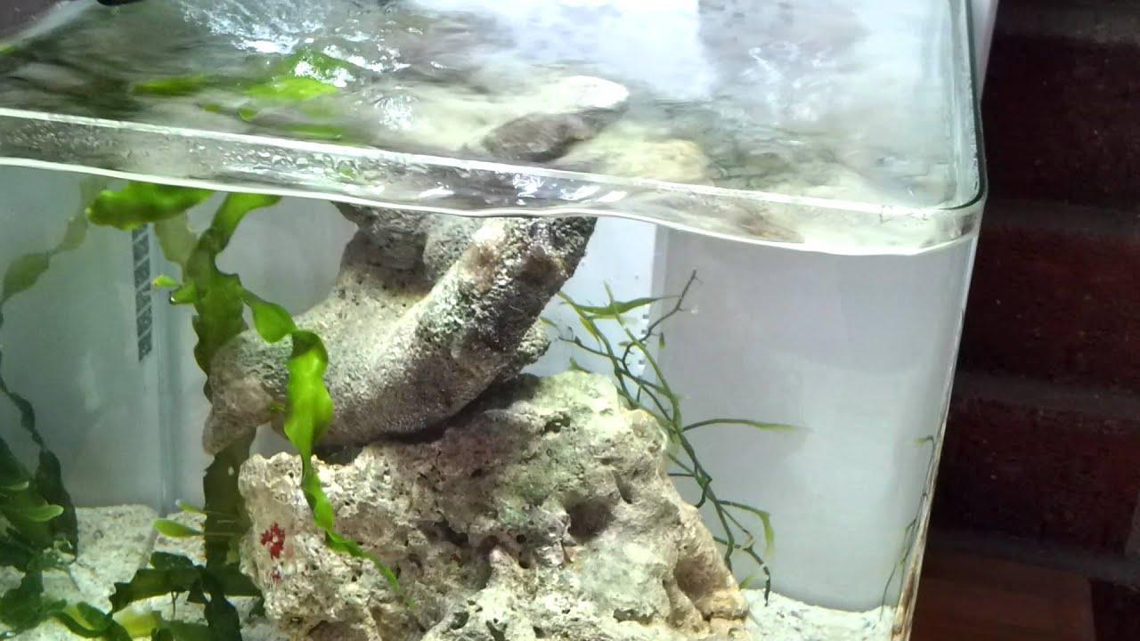 Superfish wave 15 youtube for Spacearium aquariums