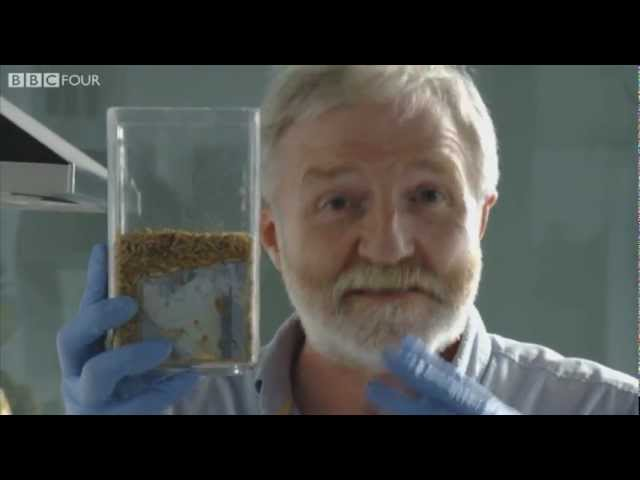 The Maggots Challenge - After Life: The Science of Decay - BBC Four