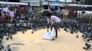 Feeding Nest (Kabutar Khana,Dadar)