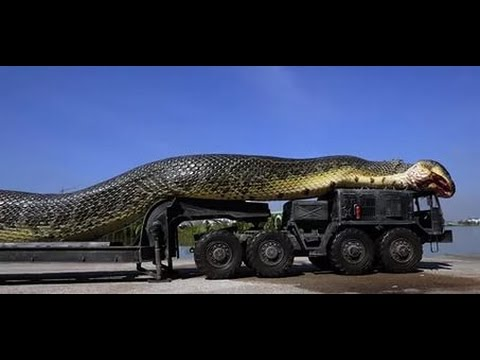 Самые большие змей в мире