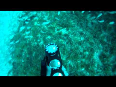 Dive off of Southwest Florida