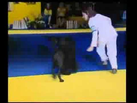 Portuguese Water Dog - WORLD DOG SHOW 2008 - SWEDEN