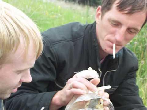 как ловят сусликов