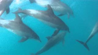 COOL Swimming with FREE DOLPHINS in ZANZIBAR - GOPRO