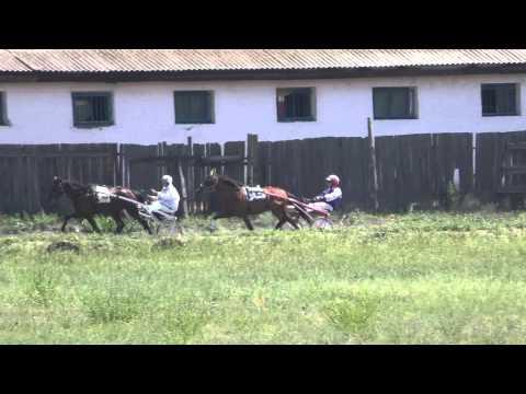 Бега-2-х лет. Абакан 25.07.2015 г. (Лошади-Horse–Animal-racing-конь-смотреть-онлайн-скачки)