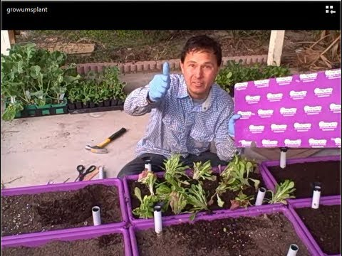 Save Time with Templates When Planting Your Growums Container Vegetable Garden