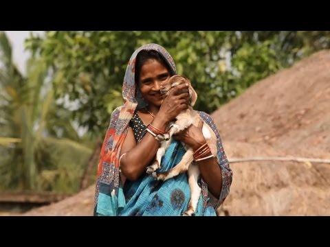 In Rural India, Women Lead the Way to Improve Livelihoods