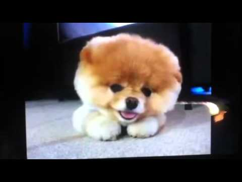 Fuzzy Fuzzy Cute Cute Vlog#2