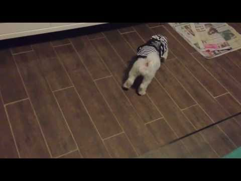 Training a cute dog at home