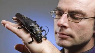 10 Most TERRIFYING Insects In The World!