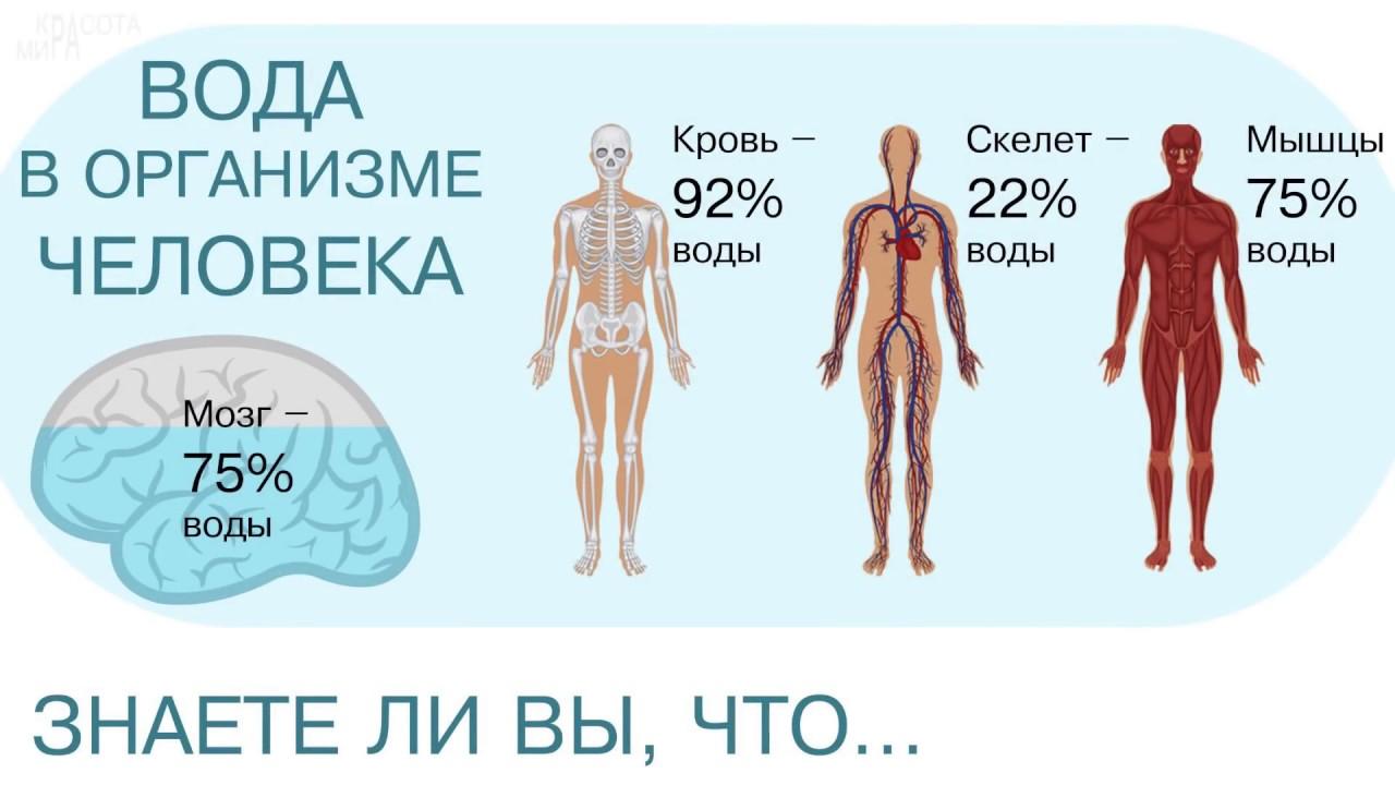 Вода выходит из организма почему 62