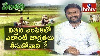 విత్తన ఎంపికలో ఎలాంటి జాగ్రత్తలు తీసుకోవాలి... ? | Suggestions From Farmer Siva Prasad Raju | hmtv