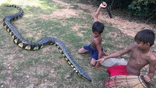 Brave Little Children Catch Extremely Giant Snake