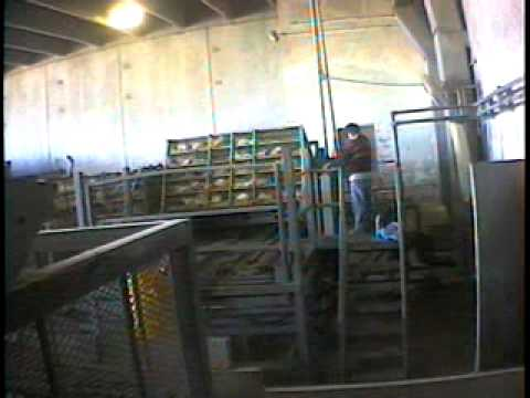 KFC Cruelty - a third investigation