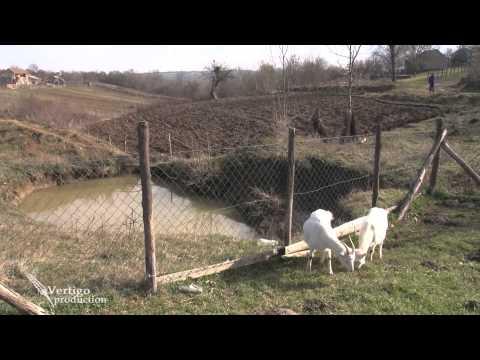 Uzgoj koza u selu Pejinovic - U nasem ataru 474