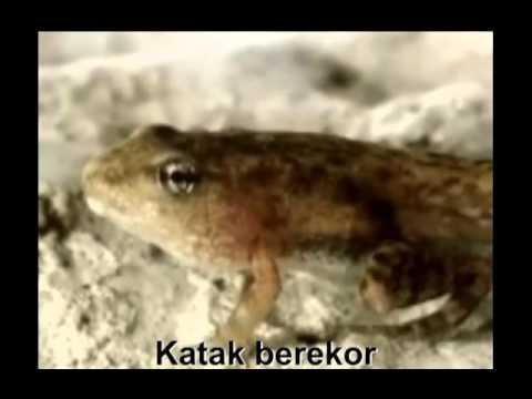 METAMORFOSIS KUPU-KUPU, KATAK, KECOA DAN BELALANG