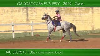 Apresentação dos animais GP SOROCABA FUTURITY - 2019 - Class.