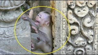 Help me mom!Poor baby Pinky cry&cry extremely loudly so scare kidnapper&want go away Mekala